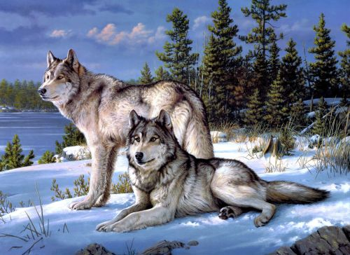2 wolves on snow