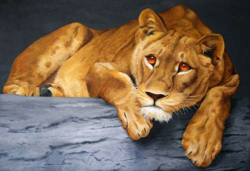 beautiful female lion