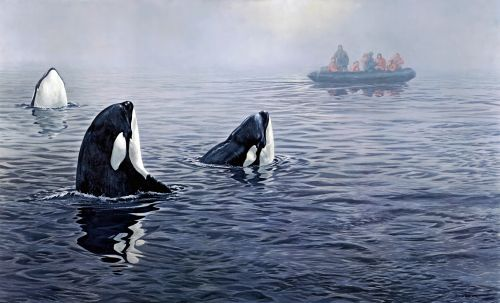 killer whales boat