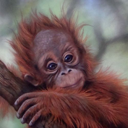 orangutan baby realistic