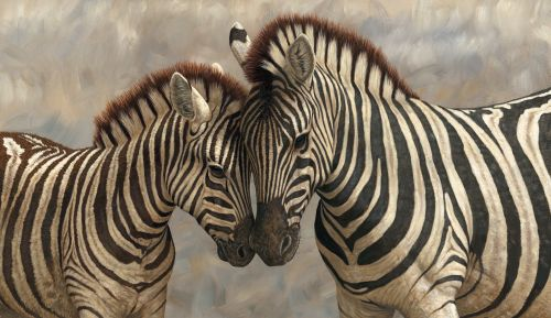 zebra together