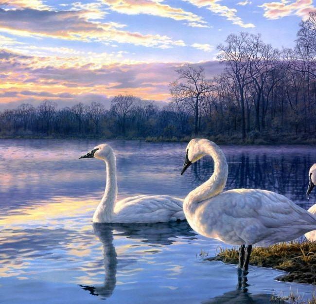 Art-Painting-Swan-Lake-Sunset-Landscape-1800×2880
