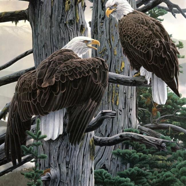 Panthera_0506_Rod_Frederick_The_Nesting_Call