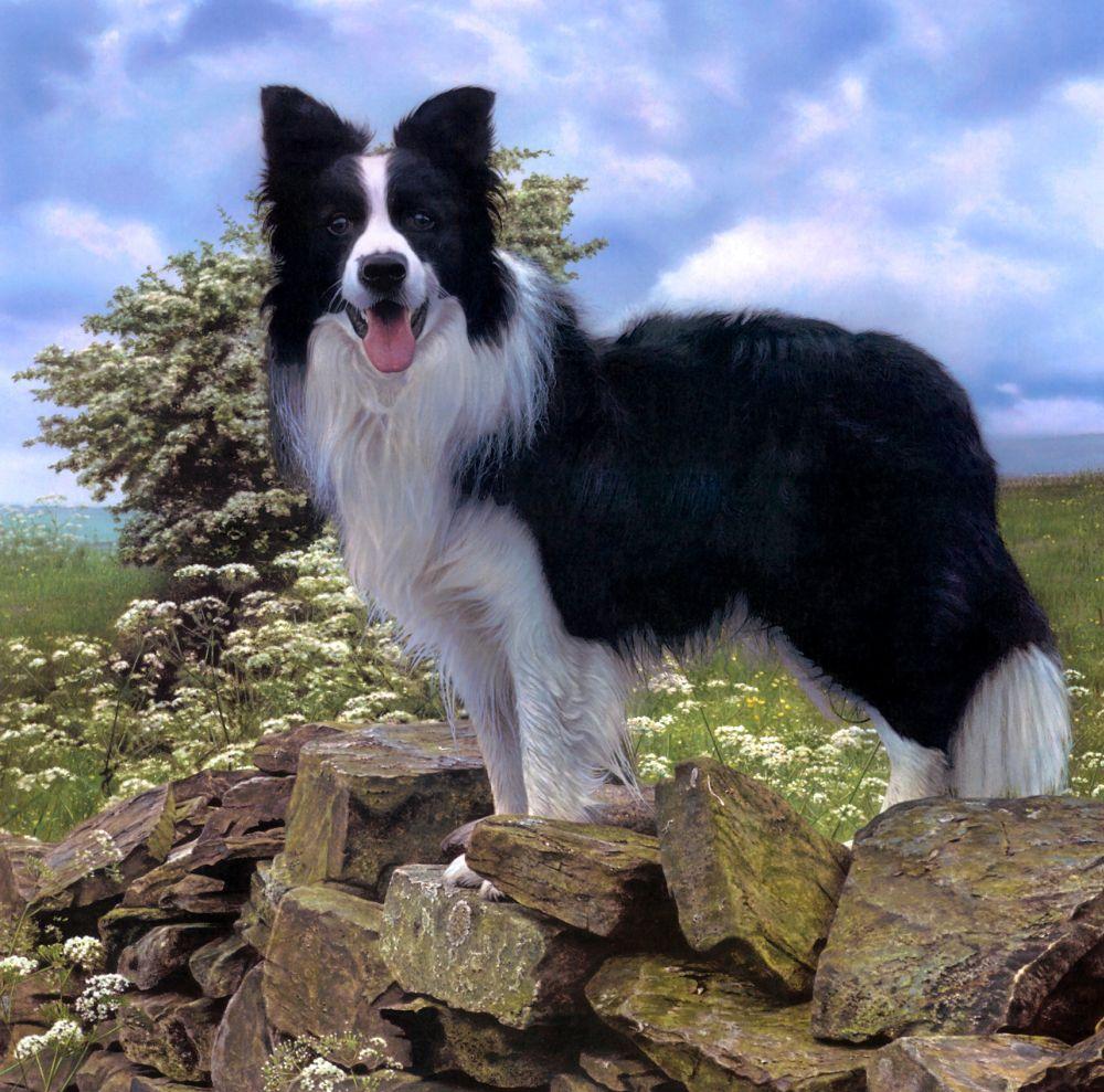 Sheepdog - The UK Art ...