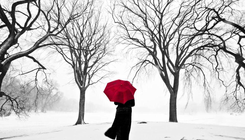 Red Umbrella Cafe Reviews