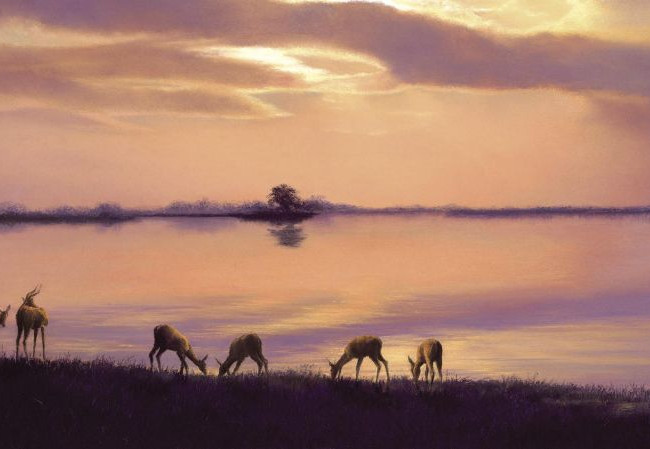 Antelope Elegance Of Evening